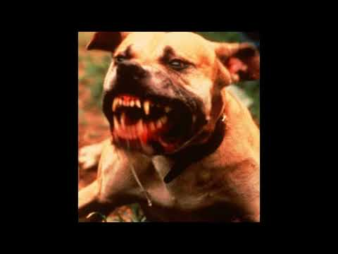"[FREE] SHECK WES TYPE BEAT - ""all bark no bite"" (PROD. vandal2k)"