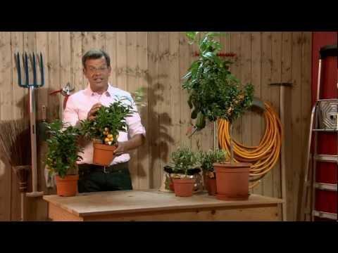 bellaflora---karl-ploberger-gartenecke:-terrasse-&-balkon