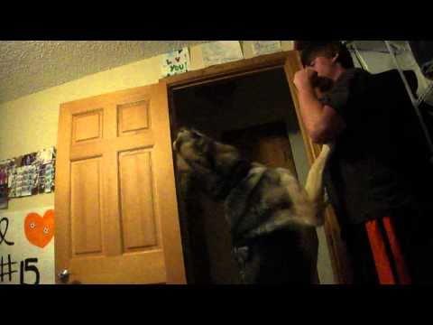 Katrina's dog, so funny! thumbnail