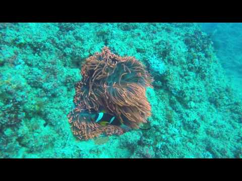 Finding Nemo in Mozambique