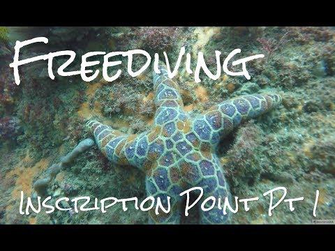 Sydney Freediving  - Inscription Point - Part 1