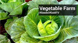 Vegetable Farming - Seeds Of Gold TV Season 1 Episode 7