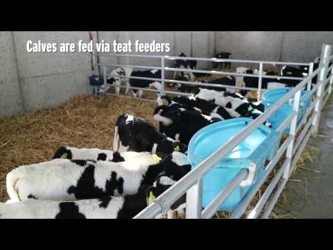 Five-bay calf shed in Tipperary