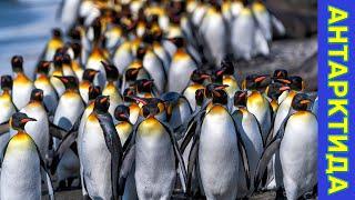 Пингивны и ленд роверы фолклендских островов