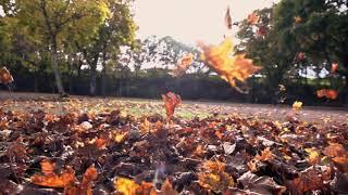 Осень футажи с мелодией листопад, осень в лесу, горы, дорога, дождь