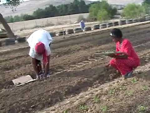African Hebrew Israelite's Organic Farm pt 1
