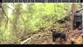 Polowanie na Niedźwiedzia 2011.