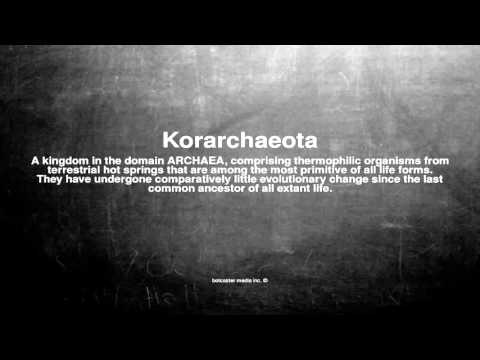 Medical vocabulary: What does Korarchaeota mean