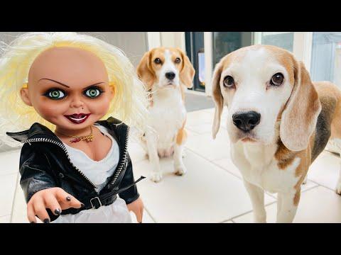 Dogs vs Chucky's Bride PRANK : Funny dogs Louie & Marie