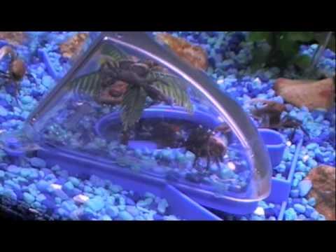 Crab Habitats Under Water Youtube