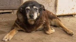 RIP to the World's OLDEST Dog | What's Trending Now