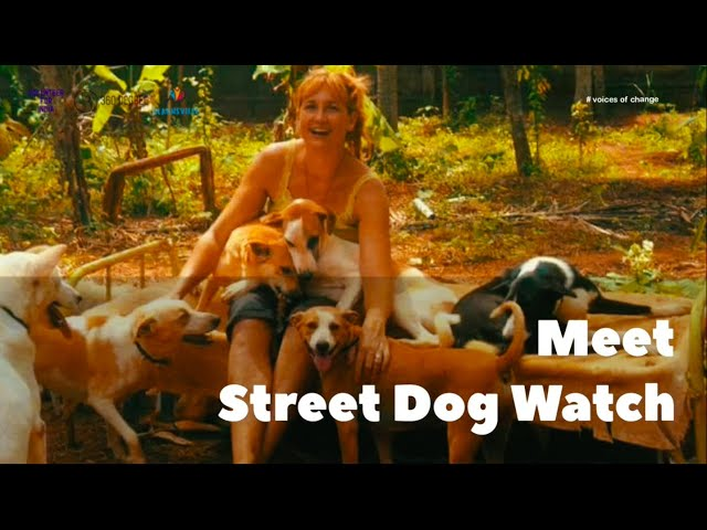 Voices of Change #7 - Street Dog Watch | Volunteer For India | 360 Degree | Learnsville