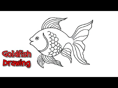 How To Draw A Goldfish   Goldfish Drawing Art   Fish Drawing Outline