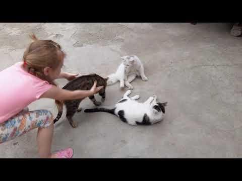 #54 Артик Беркут Лапусик Новости о котиках от Лена Ловкая