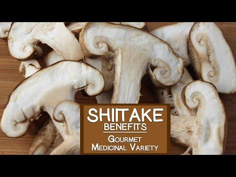 Shiitake Mushroom, The Gourmet and Medicinal Variety