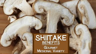 Shiitake Mushroom, The Gourmet and Medicinal Variety