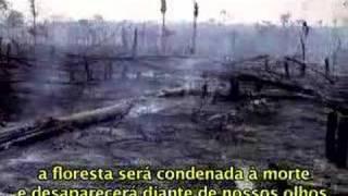 Resultado de imagem para  Desmatamento é o maior em 4 anos 24/09/2016