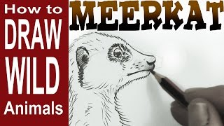 How to Draw a Meerkat (beginner) Spoken Tutorial