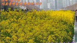 #꽃바람:#가로등예술단 #에리카 가수.부산 온천천의 유…