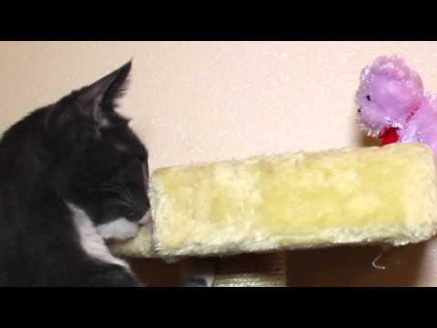Teddy Bear Wants to Play with Meesha