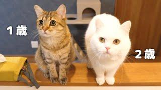 もっちり猫とほっそり猫どっちが重たい?