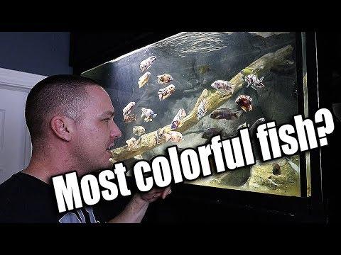 HOW TO Medicate Aquarium Fish Food
