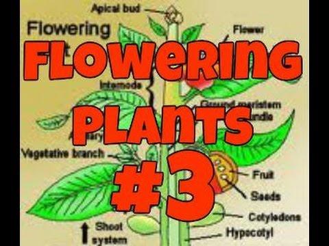 Flowering Plants part 3