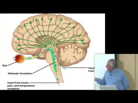 Consciousness & Physiology I