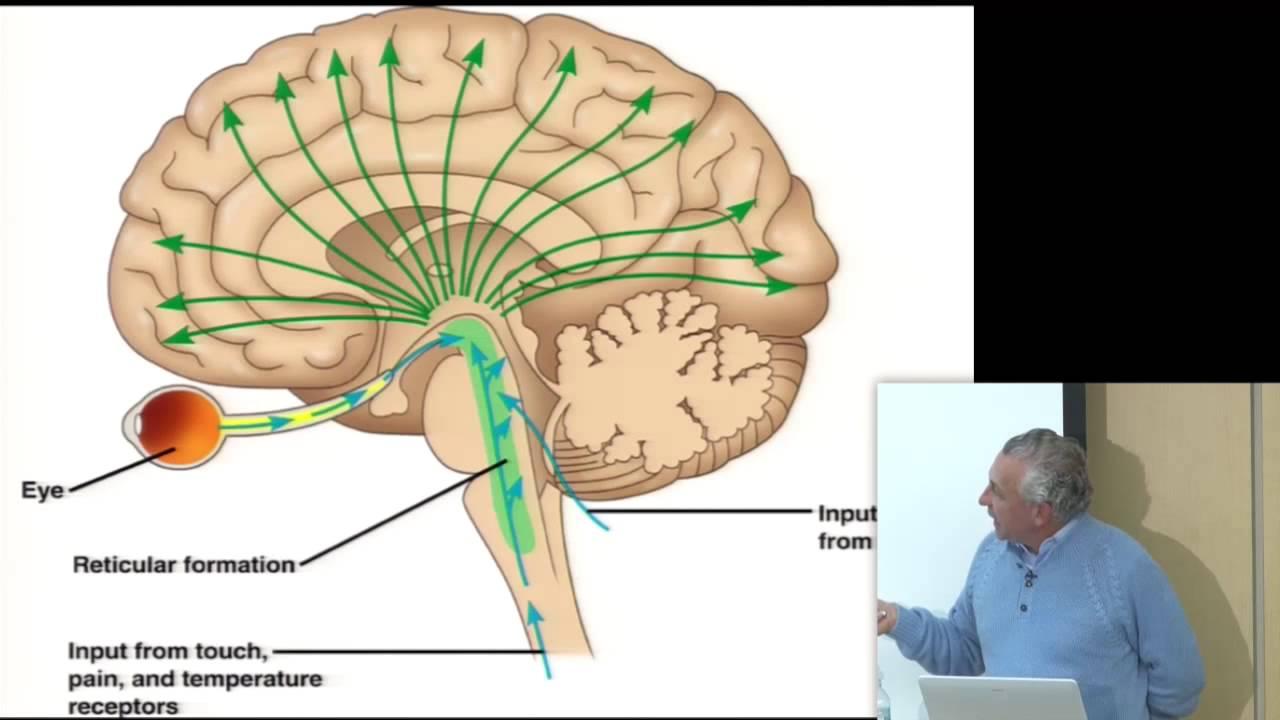 Consciousness & Physiology I - YouTube