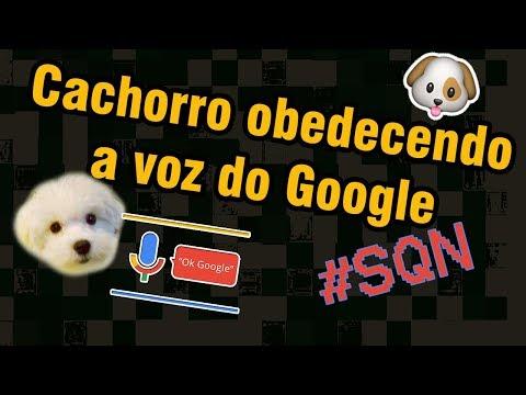 Meu cachorro Buzz tentando obedecer mulher do google tradutor