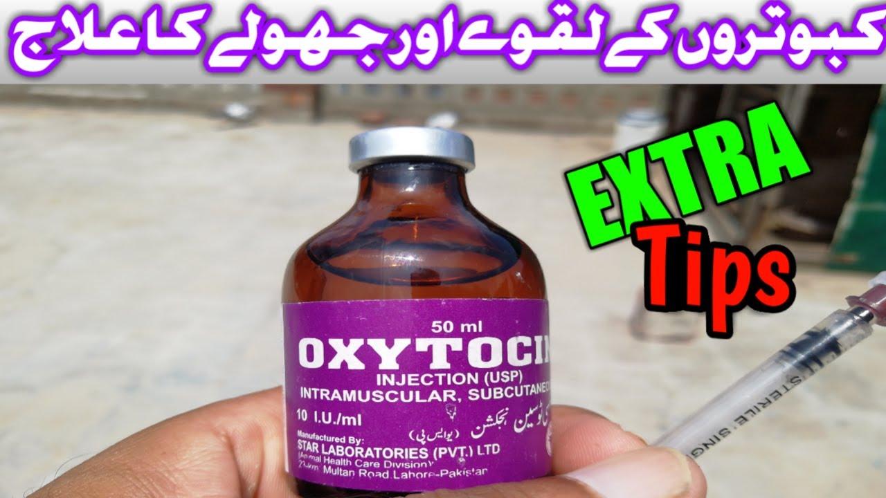 Download Treatment Paralysis Pigeons Kabooter k Laqway or Jholy ka ilaj (urdu/hindi)