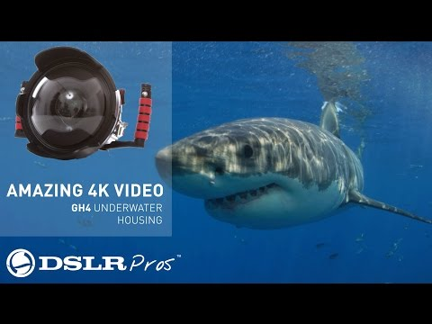AMAZING Video from Ikelite Underwater GH4 Housing - DSLRPros Andy Casagrande