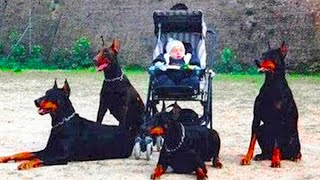 15 Dogs That Are Stronger Than An Army