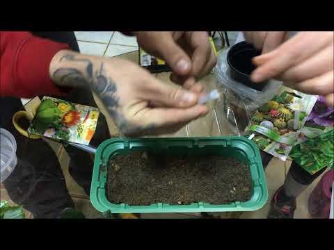 Вопрос: Можно ли вырастить кактусы из семян, купленных на алиэкспрессе?