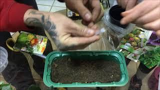 Как посадить и вырастить кактусы из семян