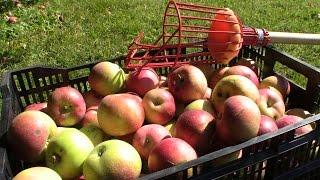 Easy Applesauce Recipe : Gardenfork.tv
