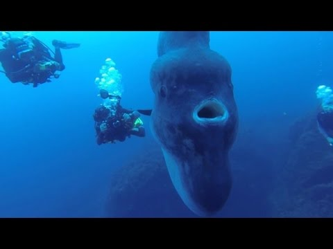 Divers Come Face-To-Face With Giant Sunfish In Rare Encounter