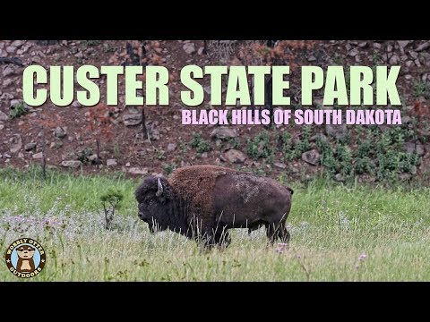 Custer State Park, South Dakota In The Black Hills