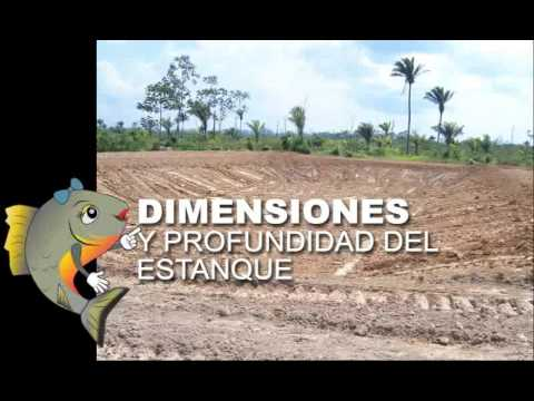 2 3 construcci n de estanques para piscicultura youtube for Diferencia entre tanque y estanque