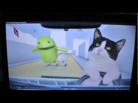 Our cat, Oreo, driving in 4G Commercial