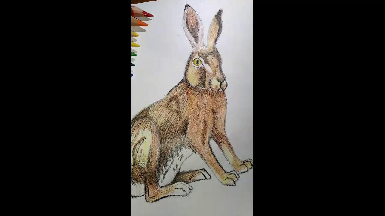 Восьминогий заяц картинка
