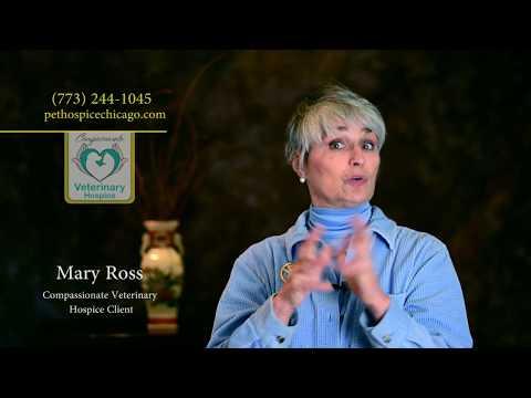 Shanti Story - Compassionate Veterinary Hospice Chicago