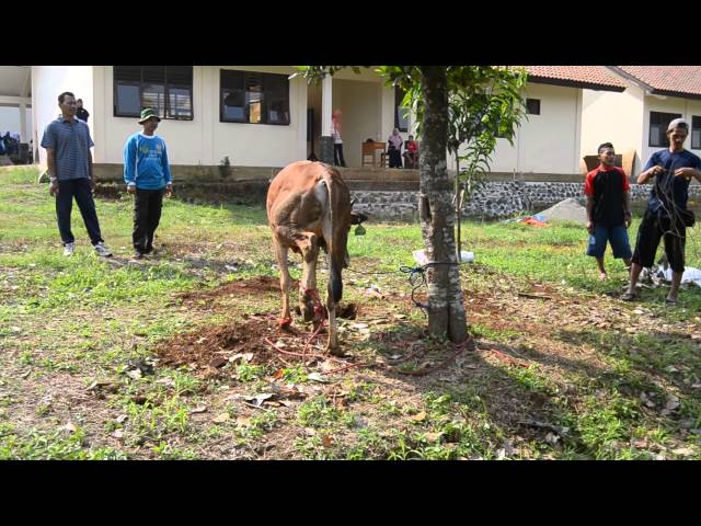 Qurban 16 Oct 2013 Lab School FAI-UMJ Kahuripan Bogor PART 1 Travel Video