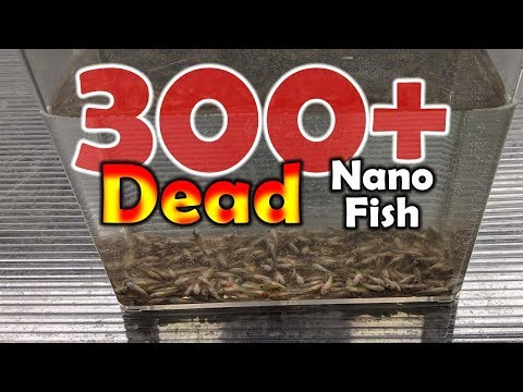 300 Dead Pygmy Corydoras In One Of Our Worst Nano Fish Orders
