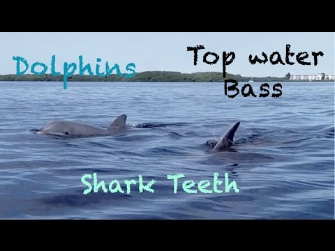 Dolphins, Shark Teeth & Topwater Bass - Florida Trip Day One