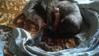 сегодня утром родились  котята