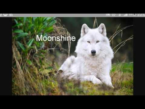 Wolf Names (Choose One Name If You Don Have A Wolf Name)