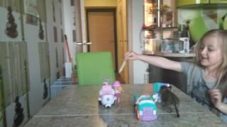 дегу играет с игрушками и делает фокус