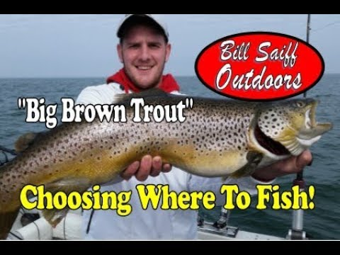 Big Brown Trout! - Choosing Where To Fish!