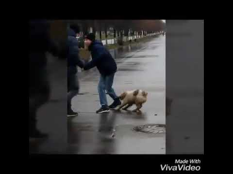 Видео как мужика ебут игрушками всё